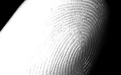 Smartphone Touchscreens May Soon Feature Fingerprint Scanners